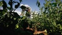 Programas ofrecen alivio financiero a trabajadores indocumentados