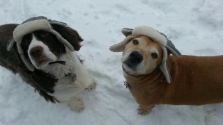 [UGCNY-CJ-pets]Its so cold even the dogs need bomber hats