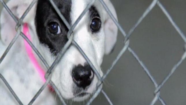 TLMD-mascota-adopcion-2