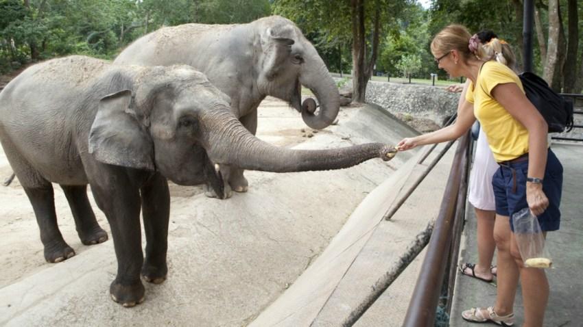 TLMD-zoologico-zoo-alimentar-animales-shutterstock_120052132