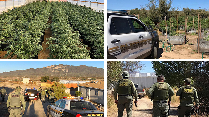 hemet-pot-grow-bust-2019
