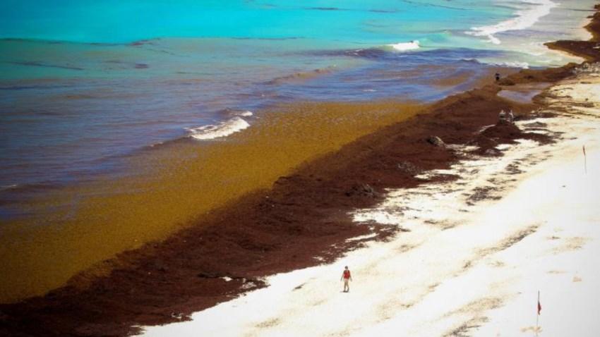 mexico-sargazo-costas-playas