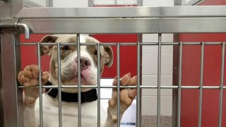 Photo of a dog at a shelter