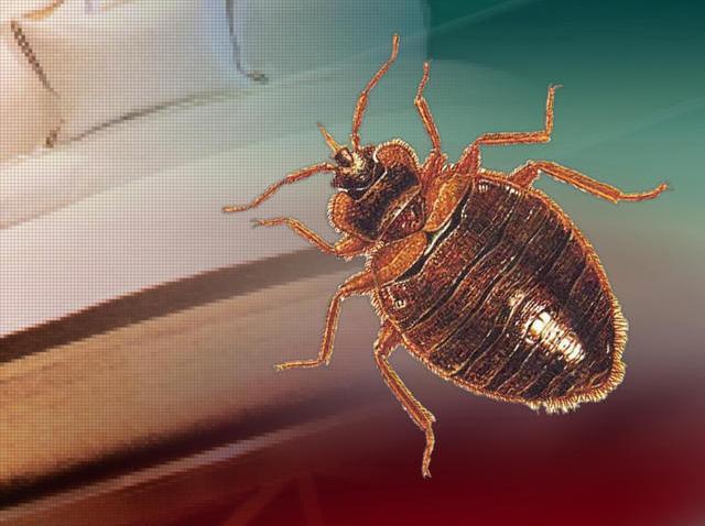 tlmd_bedbugs2
