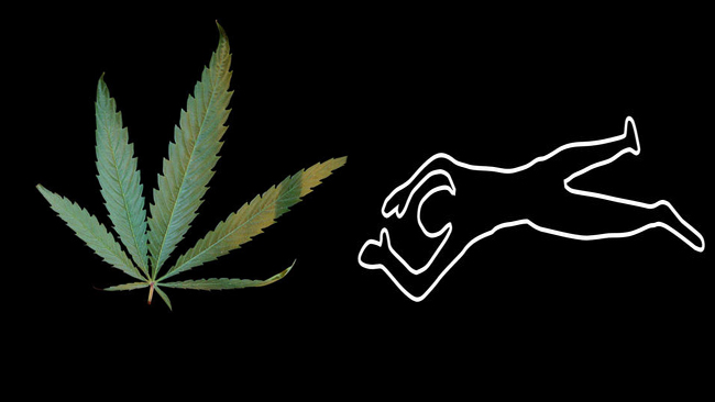 tlmd_muerte_dispensario_marihuana_westchester