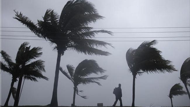 tlmd_winds_palmeras