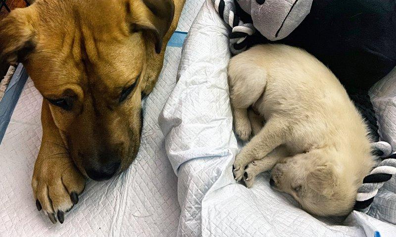 Día Nacional del Cachorro: Fotos adorables y las historias conmovedoras detrás de ellas