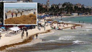 Trabajadores recolectan el 13 de abril de 2021, alga de sargazo en Playa del Carmen, en el estado de Quintana Roo (México). Las costas del estado mexicano de Quintana Roo recibieron los primeros recales masivos de sargazo de este año, con mayor afectación en los balnearios de Playa del Carmen, Cozumel, Tulum, Xcalak y Mahahual.
