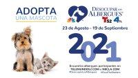 Desocupar los Albergues™ 2021 ayuda a encontrar hogares para miles de mascotas en el sur de California