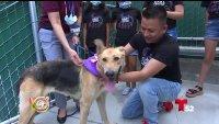 Grupo de niños regala un poco de felicidad entre mascotas abandonadas