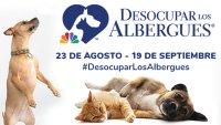 """Súmate a """"Desocupar Los Albergues"""" y adopta tu mascota"""