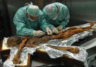 Misterio develado, la última comida del Hombre de los Hielos hace 5,300 años