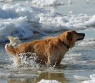 tlmd_09_perros_invierno