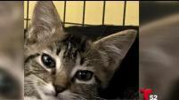 Un refugio de animales en Valencia busca a un gatito enfermo que fue robado de sus instalaciones.