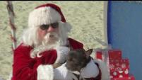 Un grupo de perros Bulldog recibieron la visita de Santa Claus en una playa de Long Beach