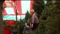 Expertos advierten sobre una posible escasez de árboles navideños para esta temporada.