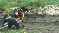 El dueño le mostraba el loro a una pareja en el parque, y cuando ellos le preguntaron si podía volar, el animal acabó en medio del lodo y no...