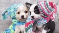Las mascotas también sufren en las gélidas temperaturas. Ve aquí algunos consejos de cómo protegerlos y evitar que se enfermen.