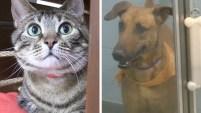Para quienes piensan que la única opción es dar a su mascota en adopción, este albergue en el Sur de la Florida ofrece opciones para evitar la separación...