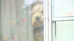 Madre de tres muere ahogada en charca helada tras rescatar a su perrita