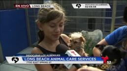 Adopción de mascotas en Long Beach tiene éxito gracias a T52 y NBC4