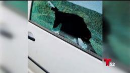 Más de docena vehículos robado en Sherman Oaks