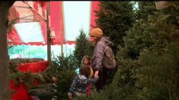 Pronostican escasez de árboles navideños naturales