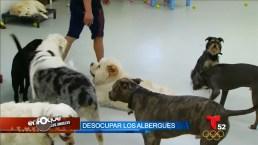 La adopción de mascotas es cada vez más fácil