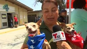 Cientos de mascotas ahora tienen un hogar