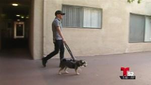 Derechos de inquilinos con animales de servicio