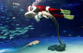 """Lo que pasó cuando Santa buscaba tiburones """"que se portaron bien"""""""