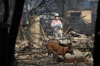 Sube a 84 cifra de muertos por Incendio Camp