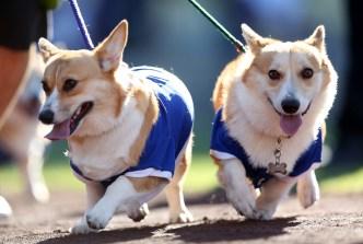 Dodgers invitan a fanáticos a traer sus mascotas al parque