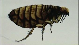 Autoridades de Pasadena informan sobre epidemia de tifus
