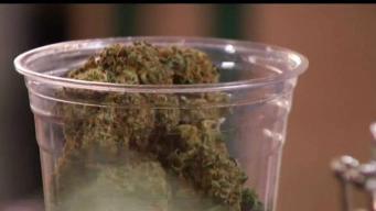 Consumo de marihuana podría impedir obtener ciudadanía