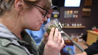 Mercado de marihuana en CA, el más grande del mundo