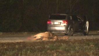 Muere cruzando autopista a caballo en plena noche