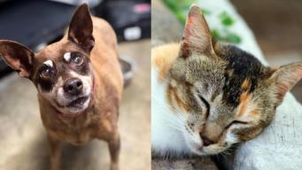 Servicio para Animales de Los Ángeles pide ayuda para alojar mascotas