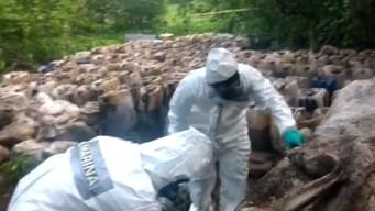 Marinos decomisan casi 50 toneladas de crystal