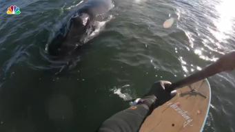 Ballena sorprende a hombre que practicaba surf de remo