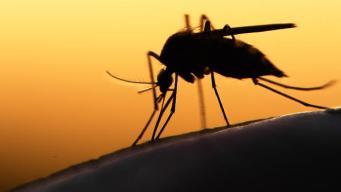 Se reporta primer caso de zika nativo en Texas