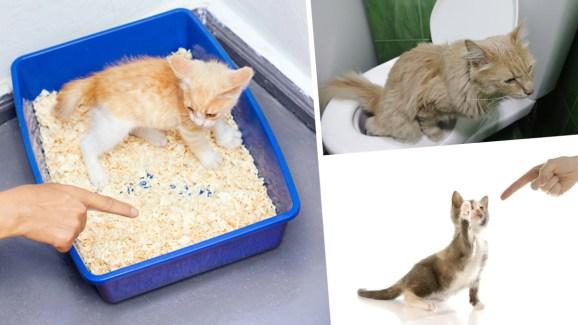 Gato En El Baño | Como Entrenar A Tu Gato Para Que Vaya Al Bano Telemundo 52