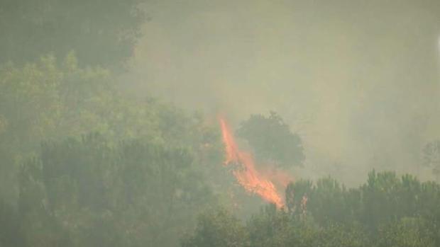 [TLMD - LA] Incendio quema 30 acres en Eagle Rock