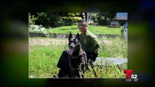 [TLMD - LA] Peligrosa persecución dejó a un perro policía lesionado