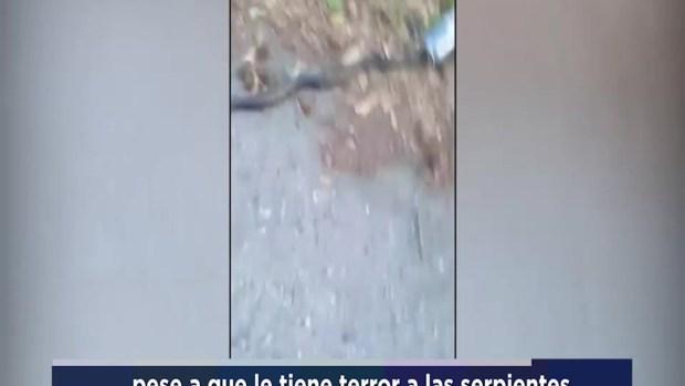 [TLMD - NATL] Rescate de terror a una serpiente atascada en lata de cerveza