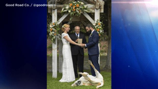 [TLMD - NATL] Viral: justo en sus votos de boda su perro hace lo impensable