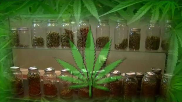 [TLMD - LA] Un año de marihuana legal en California
