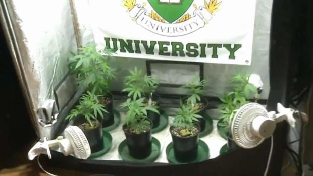 [TLMD - LA] Universidad dicta clases sobre marihuana
