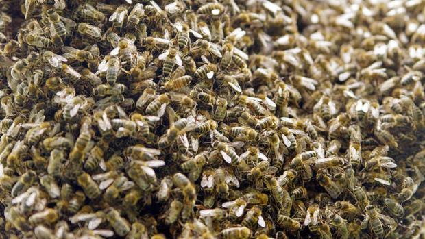Video: Ataque de abejas tiene a una familia de luto