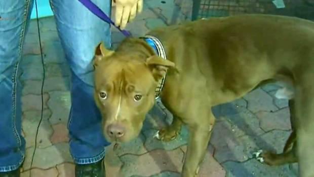 Video: Mascotas listas para adopción y cariño